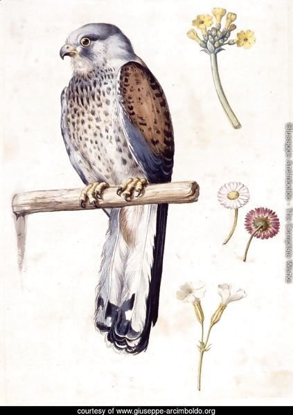 Study of a Lesser Kestrel and Flowers